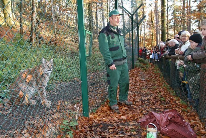 Visitors at the lynx enclosure
